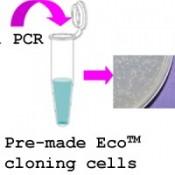 PCR-cloning-system