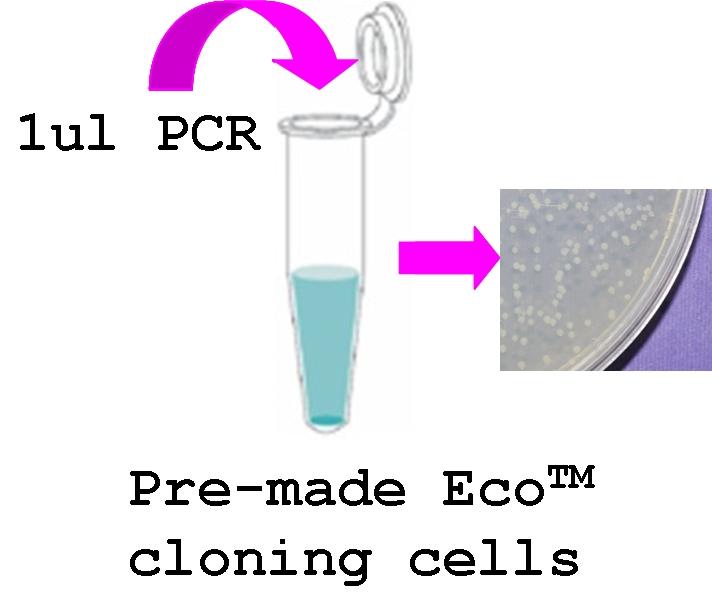 Peco T7 Nhis Pcr Cloning Kit Gentarget Inc