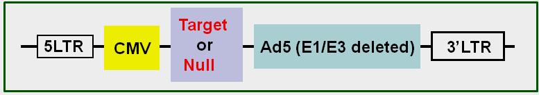 adenovirus-target-map