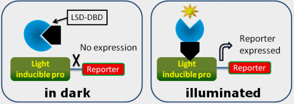 Light-inducible scheme