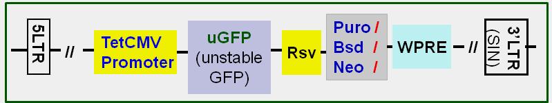 uGFP-scheme