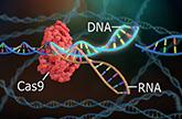 CRISPR-gRNA