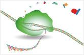 shRNA Lentivirus