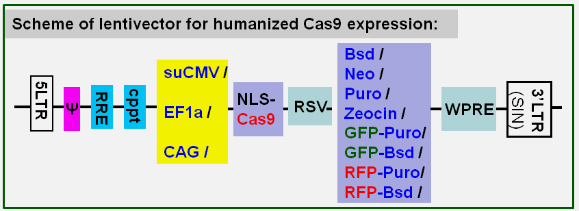 Cas9 expression lentivector map